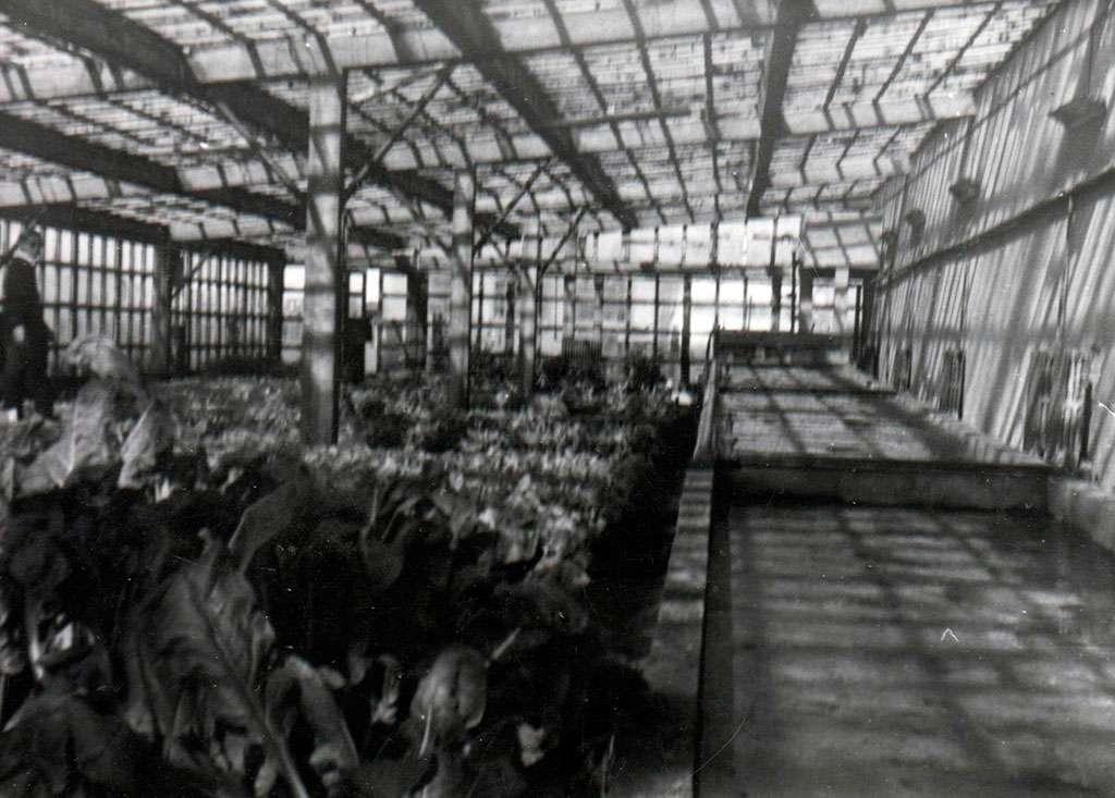 Escuela Agropecuaria Salesiana. Año 1964. Donde se cultivaban los primeros tomates fueguinos, por la técnica de la hidroponía.